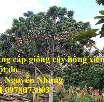 3 Cung cấp giống cây Hồng Xiêm Ruột Đỏ chất lượng cao, cam kết giống chuẩn. Giao hàng toàn quốc