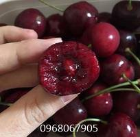 1 Chuyên cung cấp giống cây Cherry anh đào chuẩn giống giao hàng toàn quốc