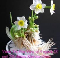 14 Bán hoa Thủy Tiên gọt trổ , tạo dáng đẹp mang nhiều ý nghĩa đón Xuân Kỷ Hợi 2019 tại Hà Nội