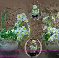 11 Hoa Thủy Tiên gọt trổ đẹp thành những tác phẩm hoa nghệ thuật đón Xuân sang