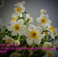 7 Bán củ hoa và hoa Thủy Tiên gọt trổ đẹp nở đúng Tết Nguyên Đán Xuân Kỷ Hợi 2019