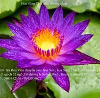 11 Bán hoa Súng Thái Lan với 120 màu sắc đẹp khoe sắc quanh năm giữa lòng Hà Nội