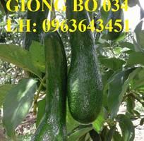 7 Cung cấp cây giống bơ: Bơ sáp, Bơ booth7, Bơ 034, bơ trái dài năng suất cao, giá tốt, giao toàn quốc