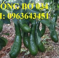 16 Cung cấp cây giống bơ: Bơ sáp, Bơ booth7, Bơ 034, bơ trái dài năng suất cao, giá tốt, giao toàn quốc
