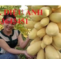 1 Cung cấp cây giống, hạt giống đu đủ lùn cao sản Thái Lan, đu đủ vàng lùn cảnh tím, đu đủ lùn da xanh