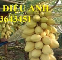 9 Cung cấp cây giống, hạt giống đu đủ lùn cao sản Thái Lan, đu đủ vàng lùn cảnh tím, đu đủ lùn da xanh