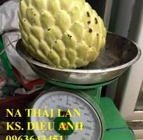 2 Cung cấp cây giống na Thái Lan, cây giống na hoàng hậu, na dai Thái Lan trồng kinh tế hiệu quả cao
