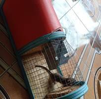 3 Bẫy chuột thông minh tự động 2 ngăn