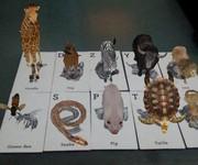 3 Thẻ 4D, Thẻ thực tế ảo 4D , thẻ động vật thực tế ảo 4D