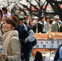 3 Tour du lịch Nhật Bản ngắm hoa Anh Đào
