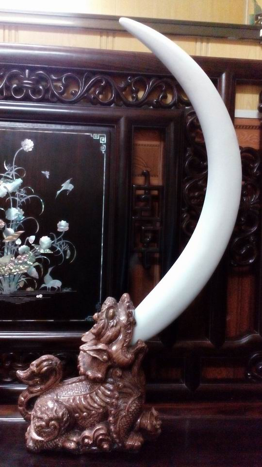3 Bộ Ngà Voi trang trí, trưng bày loại to cực đẹp và độc đáo
