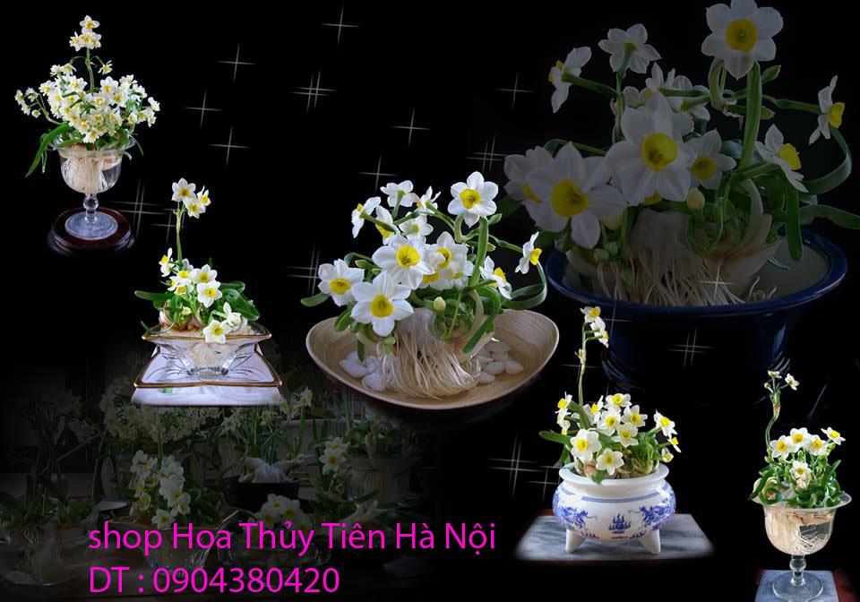 4 Bán hoa Thủy Tiên gọt trổ , tạo dáng đẹp mang nhiều ý nghĩa đón Xuân Kỷ Hợi 2019 tại Hà Nội