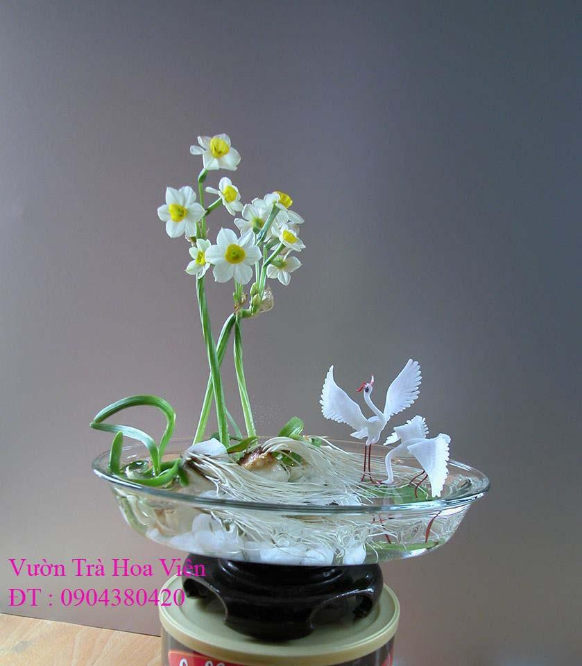 18 Bán hoa Thủy Tiên gọt trổ , tạo dáng đẹp mang nhiều ý nghĩa đón Xuân Kỷ Hợi 2019 tại Hà Nội
