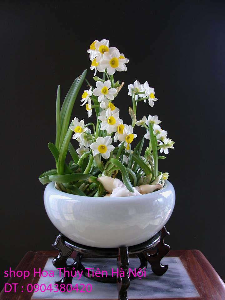 Hoa Thủy Tiên gọt trổ đẹp thành những tác phẩm hoa nghệ thuật đón Xuân sang