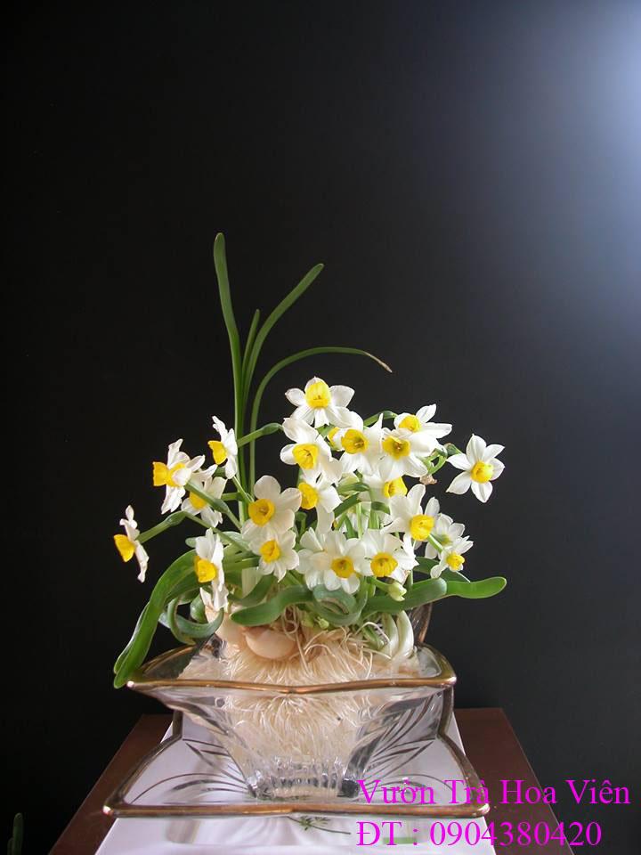 4 Hoa Thủy Tiên gọt trổ đẹp thành những tác phẩm hoa nghệ thuật đón Xuân sang