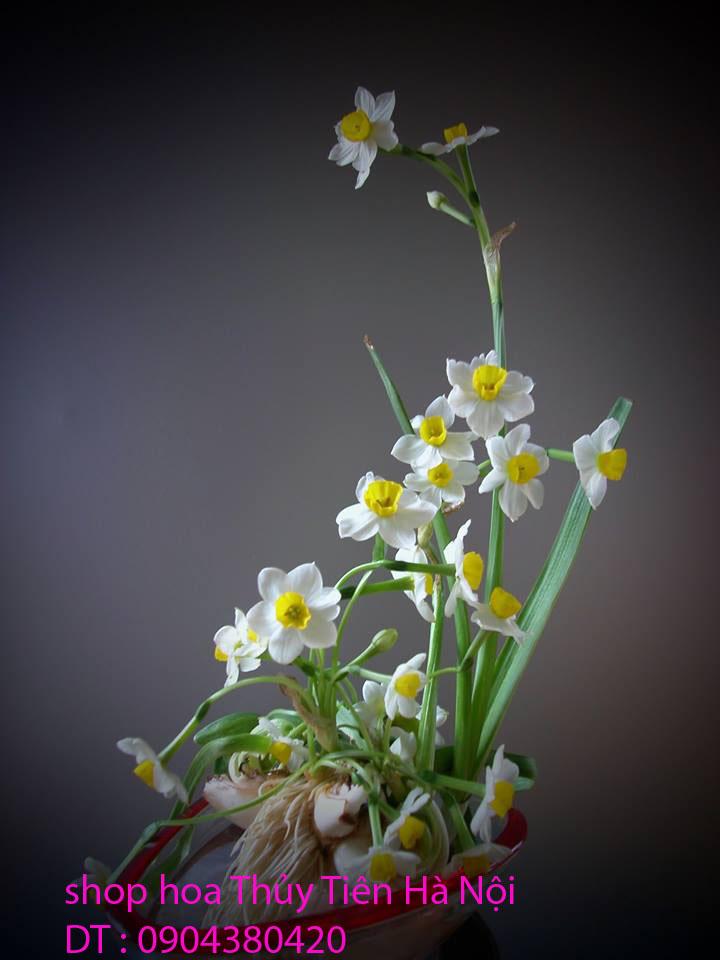 8 Hoa Thủy Tiên gọt trổ đẹp thành những tác phẩm hoa nghệ thuật đón Xuân sang