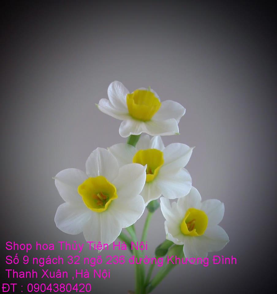 3 Bán củ hoa và hoa Thủy Tiên gọt trổ đẹp nở đúng Tết Nguyên Đán Xuân Kỷ Hợi 2019