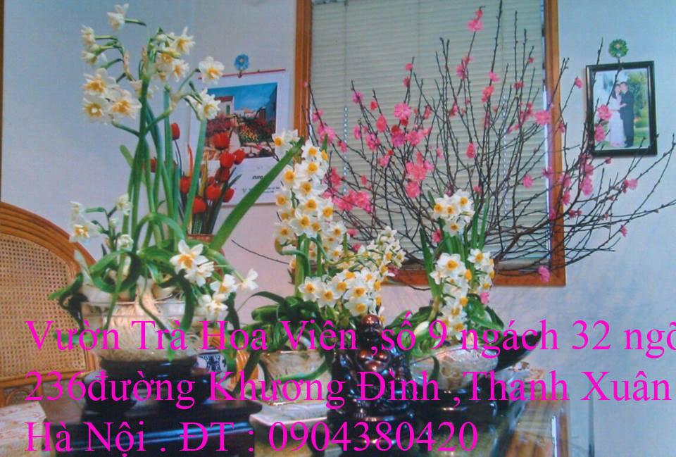 4 Cung cấp hoa Thủy Tiên Bonsai nghệ thuật đón Xuân Canh Tý 2020