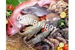Hải sản Nam Định