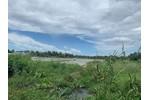 Cần bán gấp đất Trồng Lúa Nước phường Long Hoà, quận Bình Thuỷ, Tp. Cần Thơ